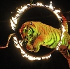 Цирки в Богатых Сабах
